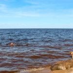 Бигль на озере Ильмень