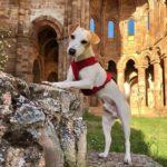 Путешествие пса Пиппера по Испании
