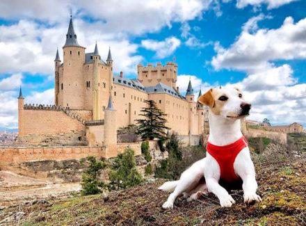 Путешествие пса Пиппера (Pipper) по Испании