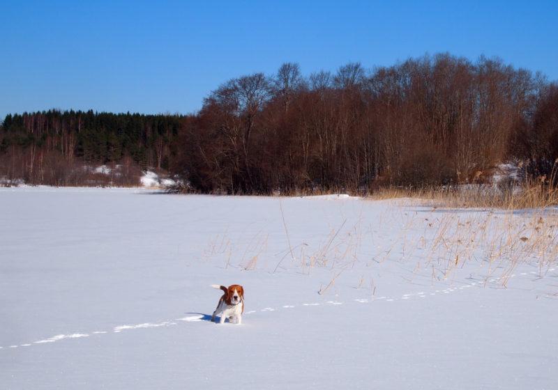 Бигль и озеров на Валдае. Зима.