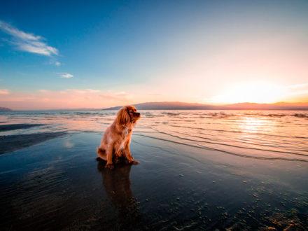 17 мест для путешествия с собакой по Америке