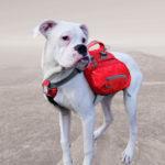 Рюкзак для собак Kurgo