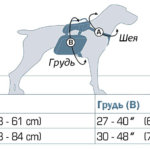 Размеры рюкзака Kurgo Baxter для собак