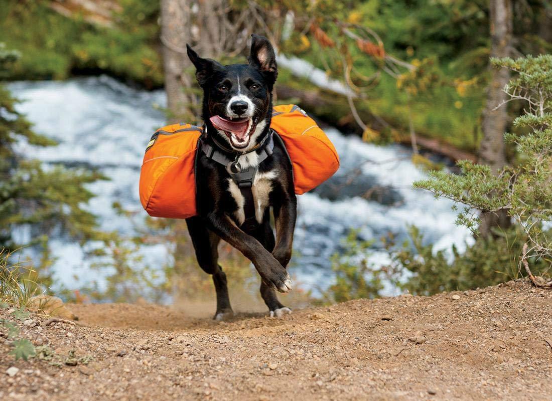 Рюкзак для собаки