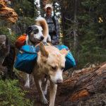 Рюкзак для собаки Ruffwear