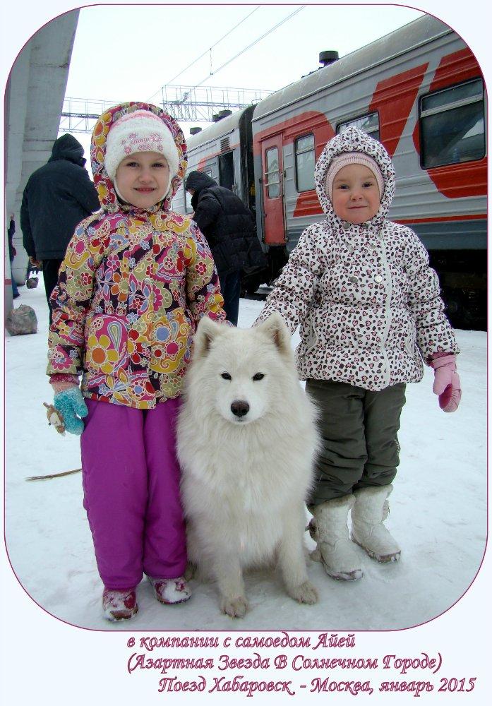 Собака Самоед с детьми у поезда