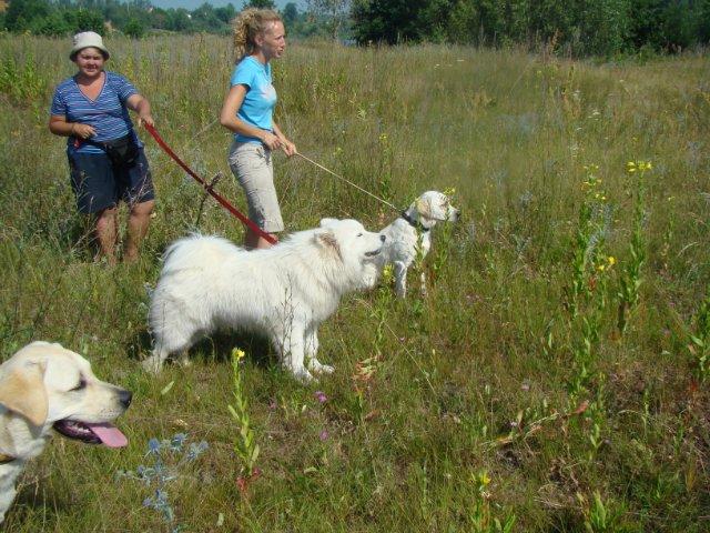 Дрессировочный лагерь с собаками под Нижним Новгородом