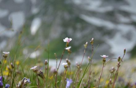 Мой первый поход в горы, на Оштен. И он же - через несколько лет