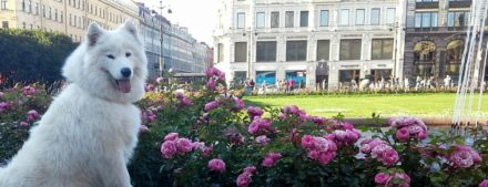 Цветы в Петербурге