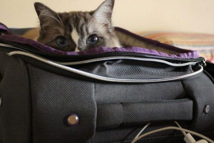 Кошка в сумке