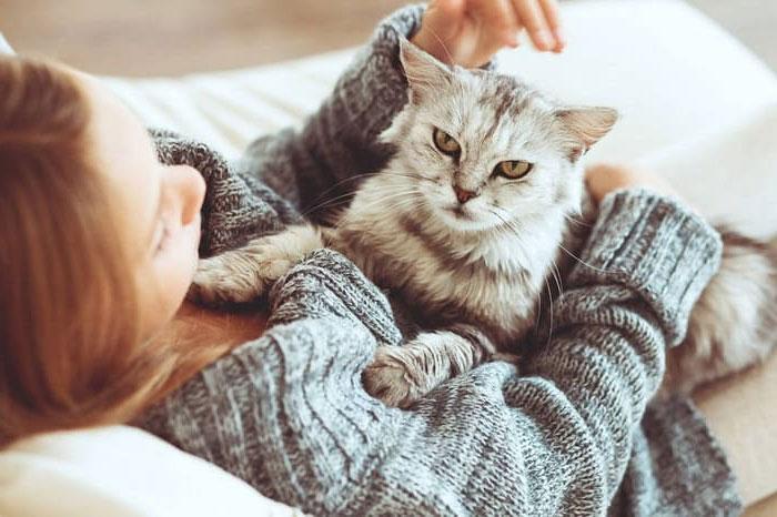 Оставить кошку для путешествия