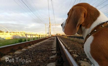Поездка с собакой на поезде