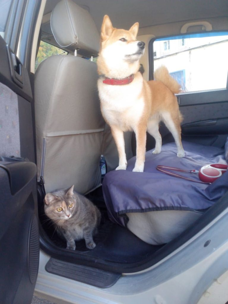 Поездка с собакой в Крым