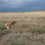 С собакой на машине в Крым