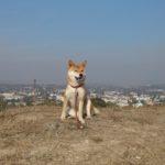 С собакой в Крым