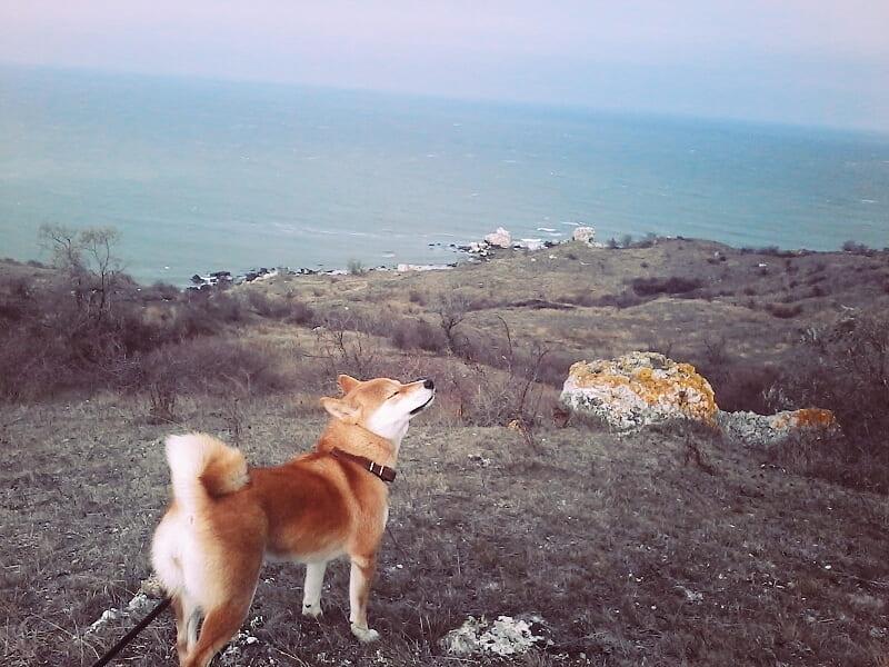 Путешествие в Крым с собакой