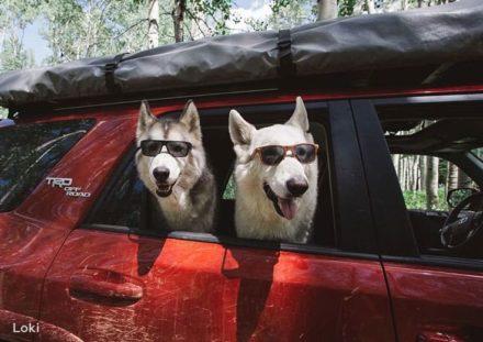 Поездка с собакой на машине