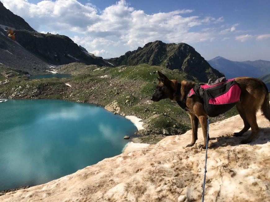 На Софийские озера с собаками