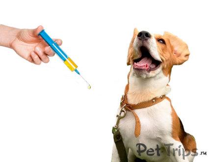 Необходимые прививки для собак и кошек