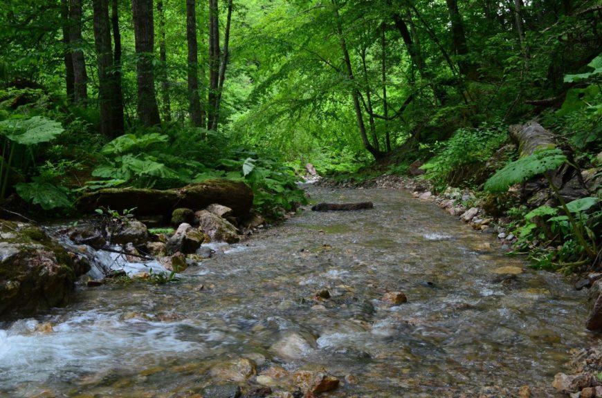 Большой Тхач леса и реки
