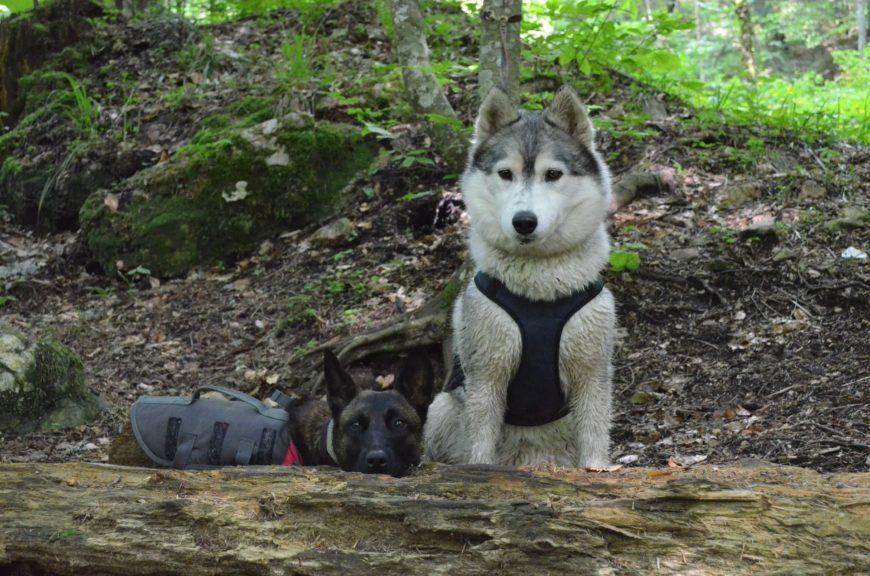 С собаками на Большой Тхач (Адыгея)
