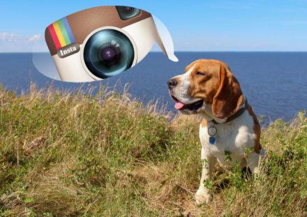 Собаки-путешественники в Instagram