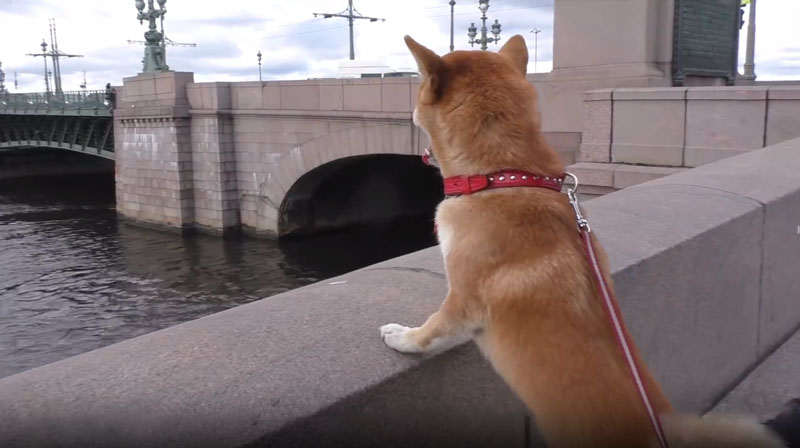 Поездка с собакой в Петербург