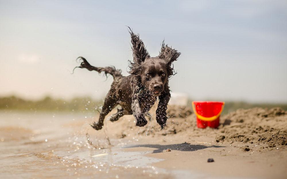 Собачий пляж в Аликанте, Испания