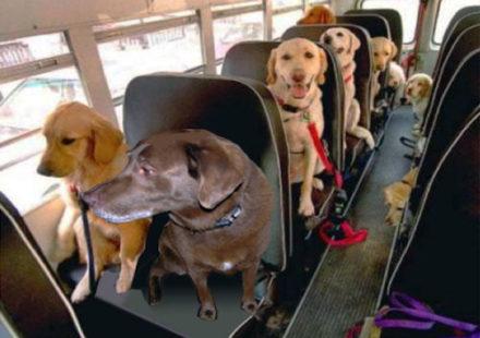 Поездка с собакой на автобусе