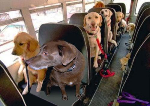 Поездка с собакой или кошкой на автобусе