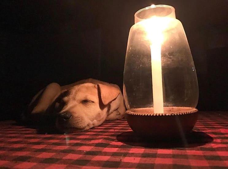 Щенок Чапати у лампы в кафе на столе