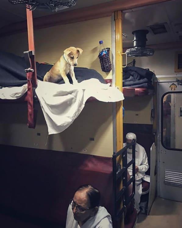Щенок Чапати в поезде