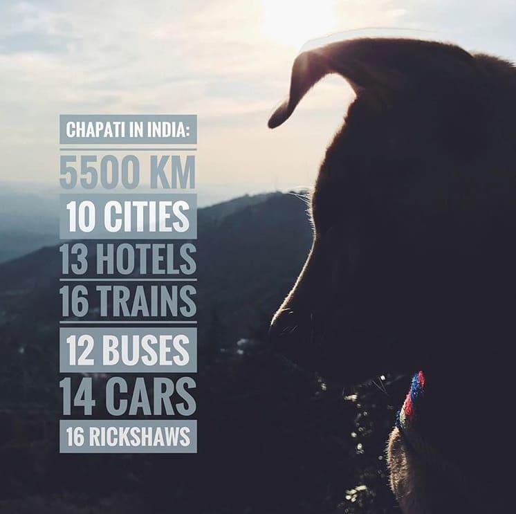 Путешествие собаки Чапати