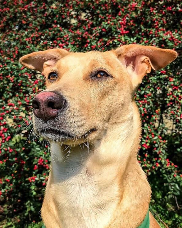 Путешествие с собакой Чапати