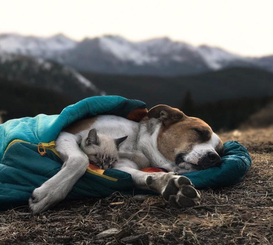 Путешествие с кошкой и собакой. Поездки.