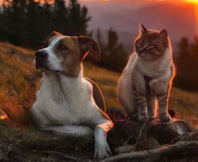 Генри и Балу - путешествия кота и собаки
