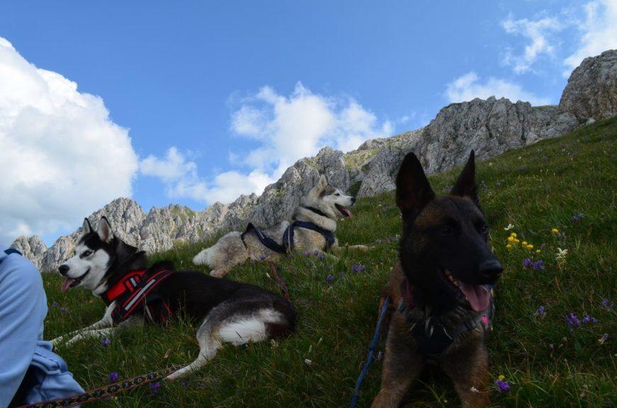 Поход с собаками на гору Оштен (Адыгея)