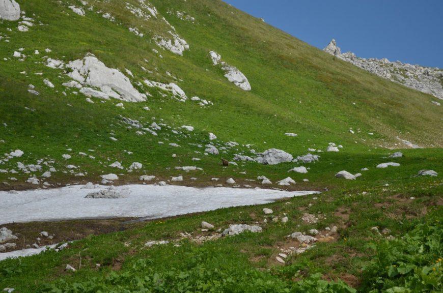 Медведь в походе с собаками на гору Оштен (Адыгея)