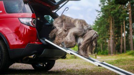 Land Rover оснастит свои внедорожники душем для собак