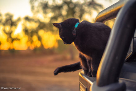 Путешествие Рича с кошкой Ивой по Австралии