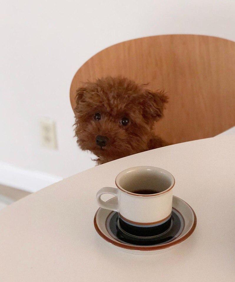 Remy Coffee на Олимпийский Жилой Массив, 5 (Кафе)