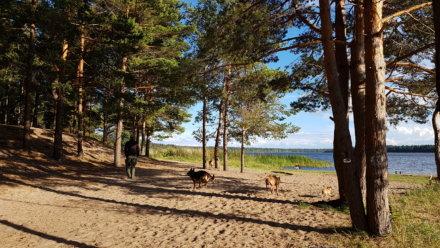Липовское озеро на Unnamed Road (Озёра и карьеры)