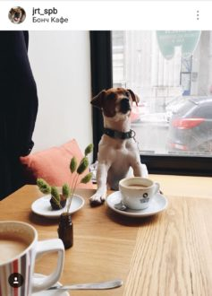 """Кафе """"Bonch"""""""