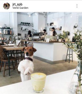 """Кафе """"Verle garden"""""""