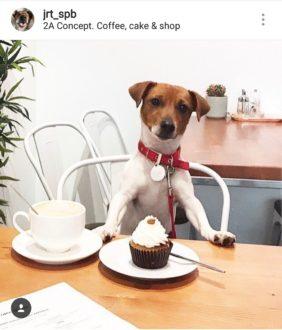 """Кафе """"2a Concept"""""""