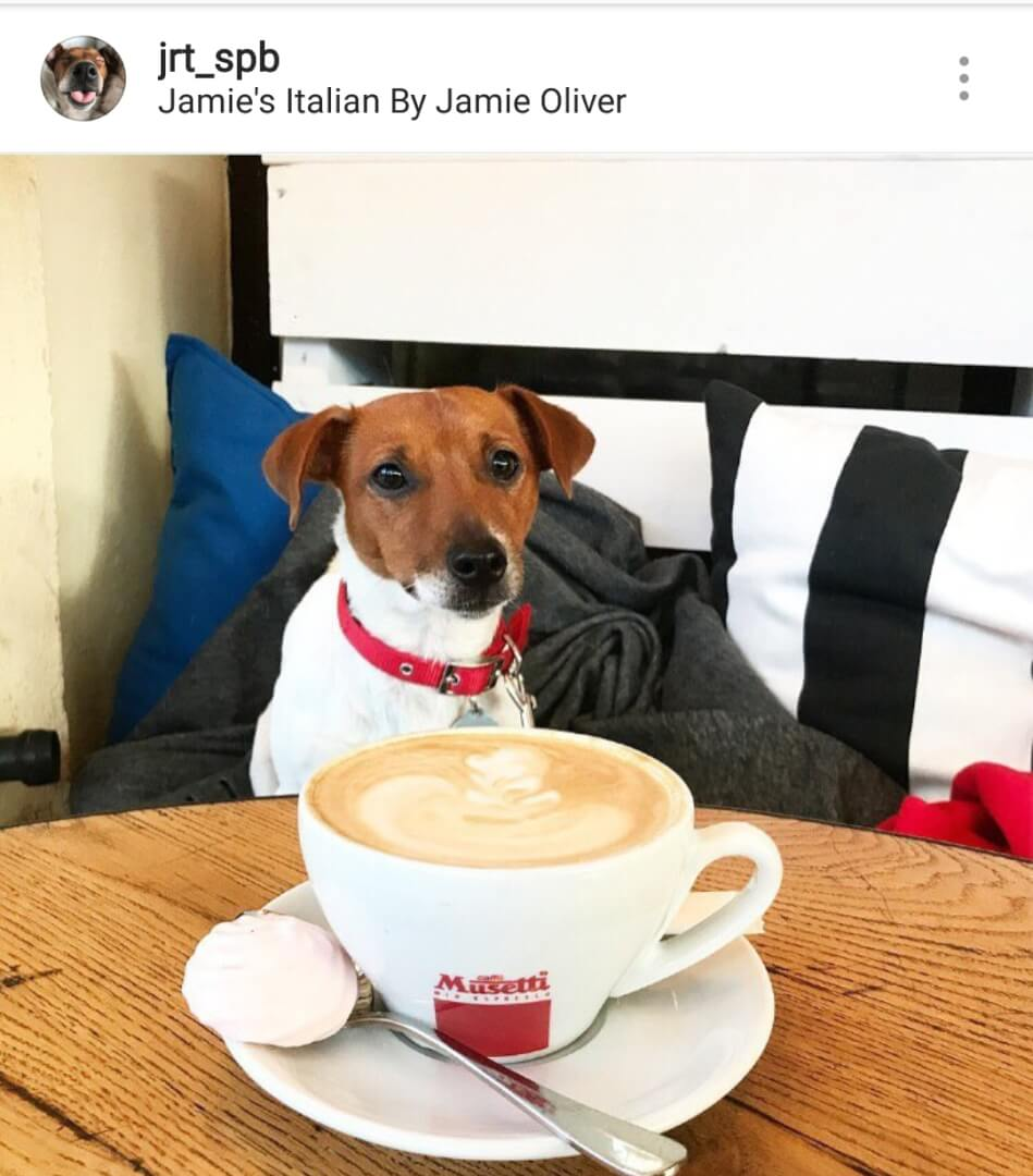 Jamie's Italian на Конюшенная пл.,  2г (Рестораны)