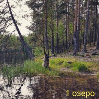 карьер Гаврилово на ул. Строительная,  Гаврилово (Озёра и карьеры)