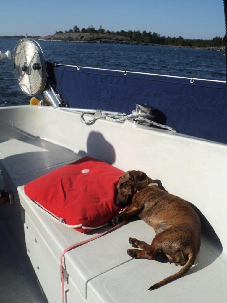 Собака на яхте