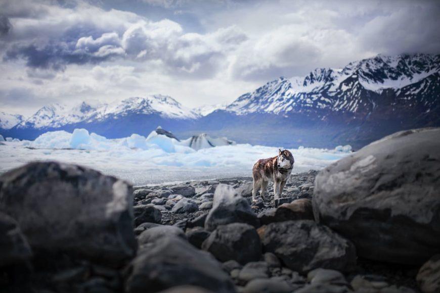 Портреты собак от Alicja Zmyslowka