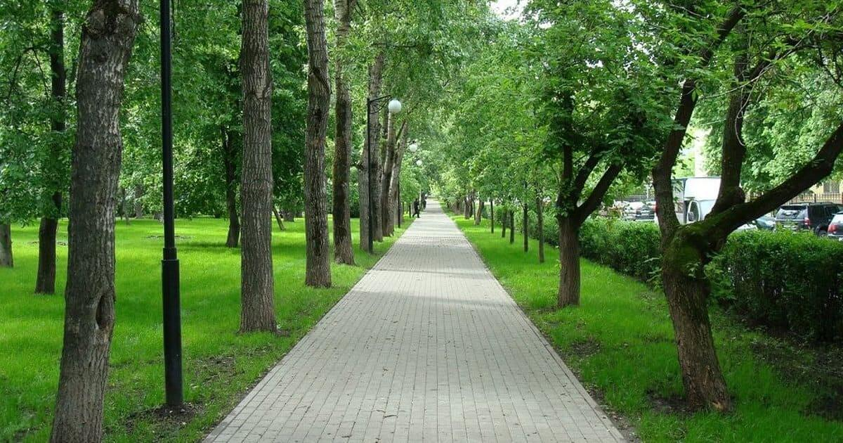 Чапаевский на Чапаевский парк,  Ленинградский пр.,  57А (Парки)